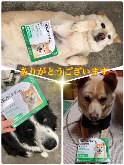 森にゃんこ2_保護犬.jpeg