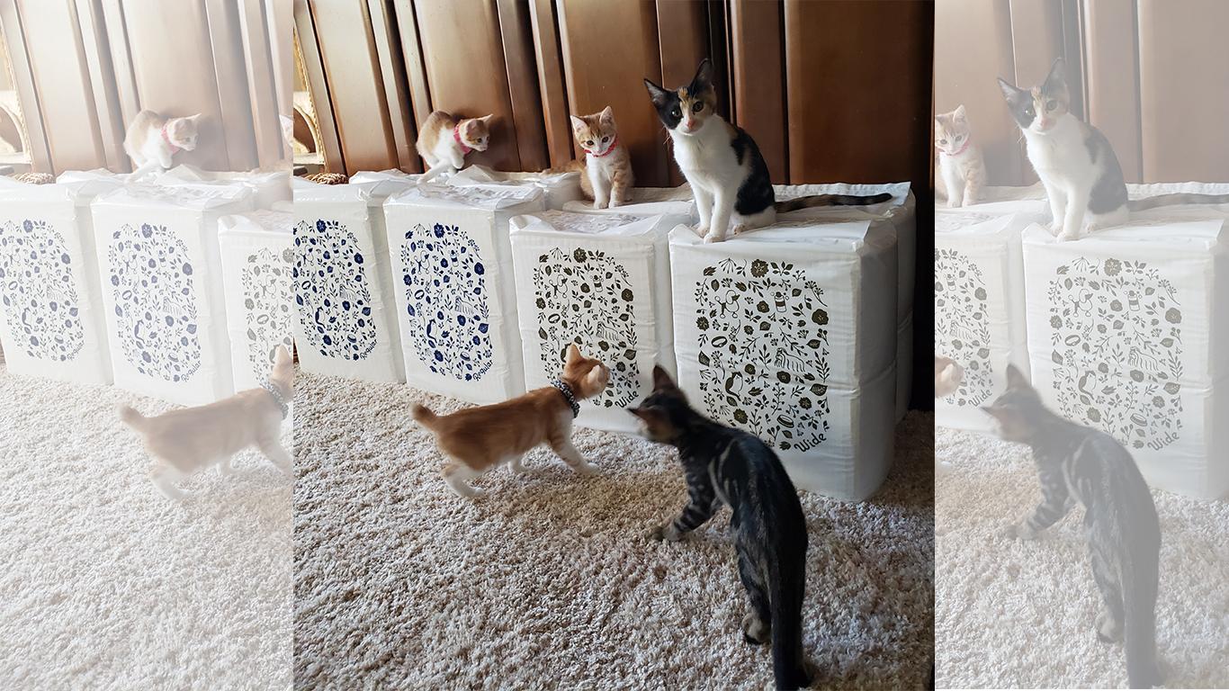 猫の未来とびら_36.jpg