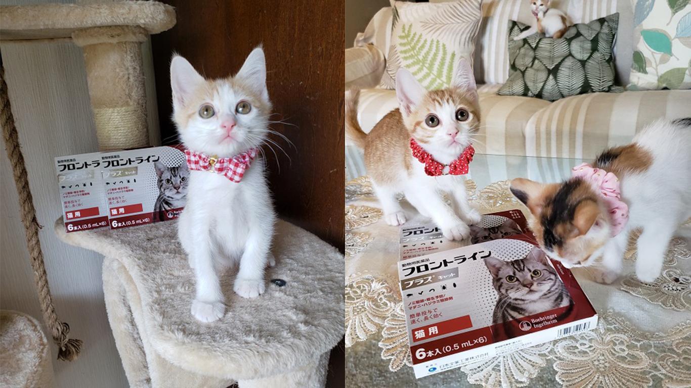 猫の未来とびら_44.jpg