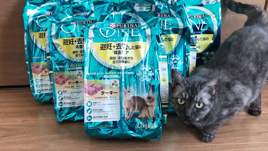 釧路アニマルレスキューレッドハート1_保護猫.jpg