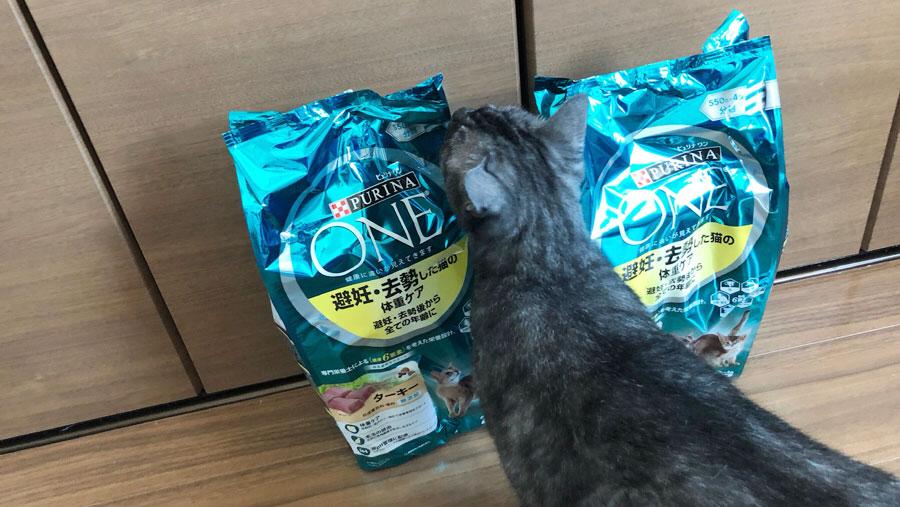釧路アニマルレスキューレッドハート3_保護猫.jpg