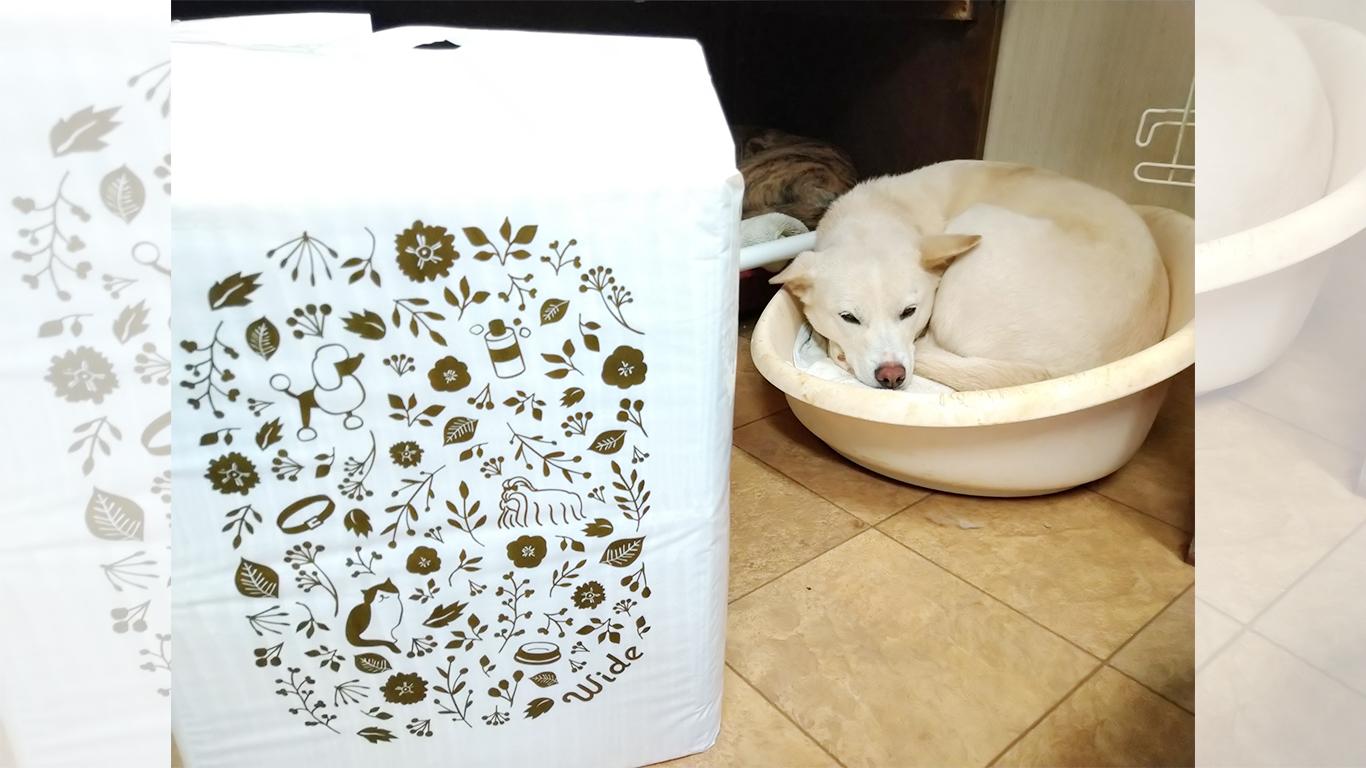 BERRY'S-DOG<RYU>_39.jpg
