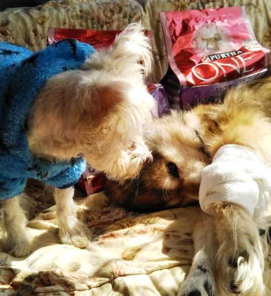shippochan_rescueddog.jpg