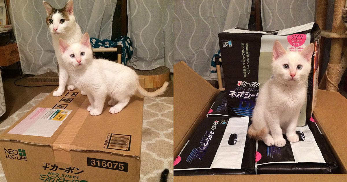 sho12_保護猫.jpg